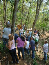 10 years ago Embrapa planted these 3500 trees