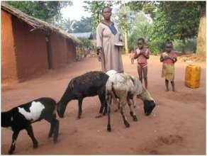 Congo Livestock