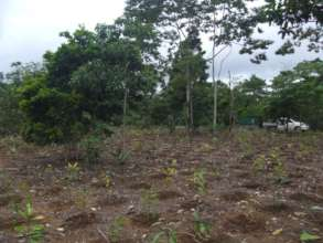 An early restoration planting
