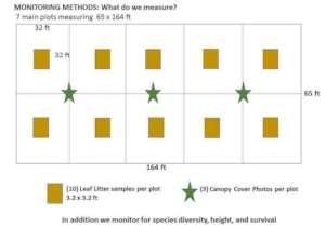 Monitoring diagram (courtesy of Dr Robert Kooyman)