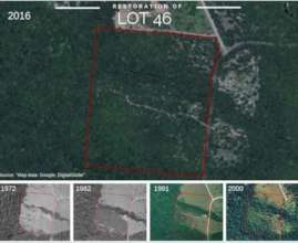 The reforested Lot 46 over time, from above