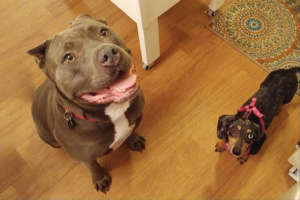 Bam with Marney, a former shelter dog whom Lacey f