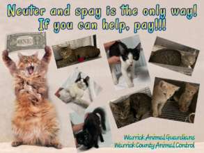 Some of the Cats we Raised Fund for.