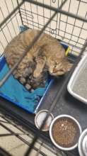 Ayla and her newborn kittens waiting for a foster.