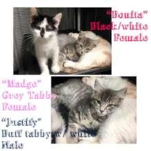 Bonita, Madge, and Justify