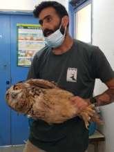 Eagle Owl with Chief Keeper, Shahar