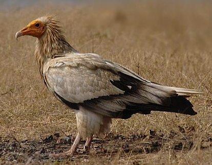 Save Israel's Birds of Prey