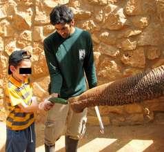 Feeding the Asian elephants