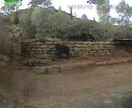 Infrared camera research image of Asian elephant