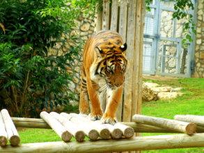 Enrichment apparatus in the Sumatran tiger exhibit