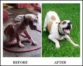 Emergency Vet Care for Street Dogs in Costa Rica