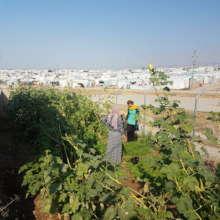 Gardening Project