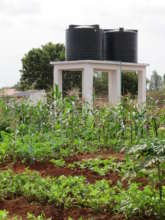 Garden plots and water storage