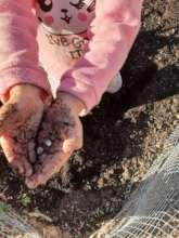 Aurora in Ruth's Garden, Family Planting Day