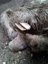 One of Neta's brutally mutilated claws.