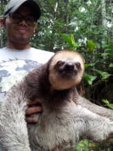 Sloth ready to be released at our project site.