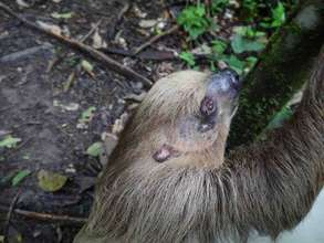 Sloth released after 2 months' recovery head wound