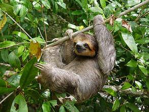 One happy sloth!