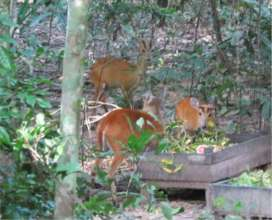 Released Muntjac in excellent condition