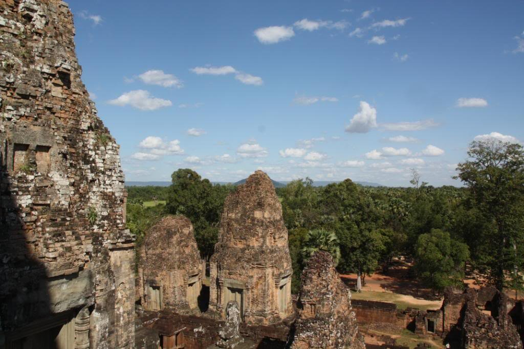 Help Bring Wildlife Back to Angkor Forest