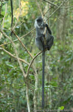 Help Bring Wildlife Back to Angkor