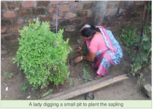 A lady digs pit for plants to be grown