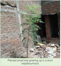 Planted tree growing in a slum neighborhood