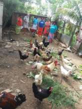 Bua Workshop- Wild Plant Feeding Demonstration