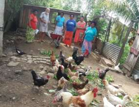 Over a dozen Happy Chicken workshops so far!