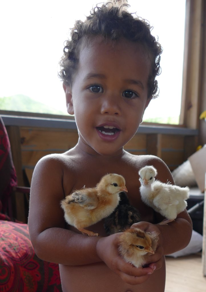 Happy Chickens for Fiji Food & Climate Emergency!