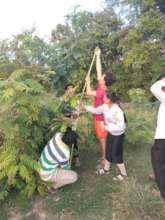 students checking on their trees