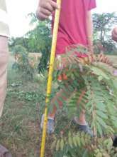 monitoring the growth of new saplings