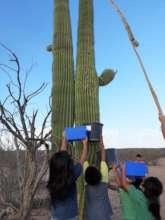 Bahidaj (Ha:san or saguaro fruit) Harvest Team