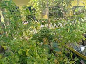 Wonders of nature planted by pupils and teachers