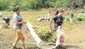 Everyone helps to set up community garden