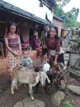 Families in Dhading receiving goats