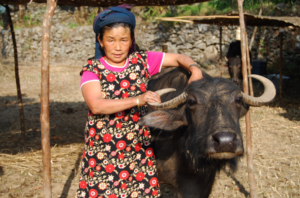 A woman and her Water Buffalo