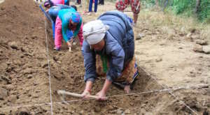 Women digging out the foundation for a new school