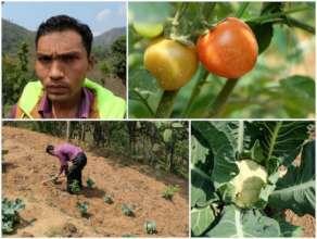 A healthy crop
