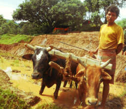 Farmer in village jeevanpur Nepal
