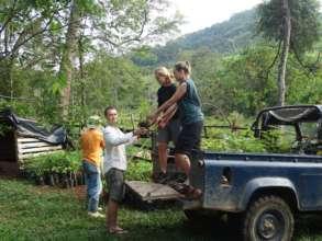 Loading the seedlings