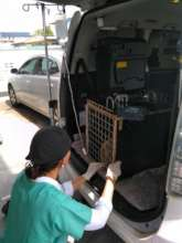 Anteater receiving treatment in our rescue van