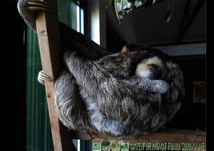 Mimi sleeping close to his mum