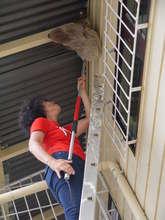Monique rescues a 16 pound 2toed sloth