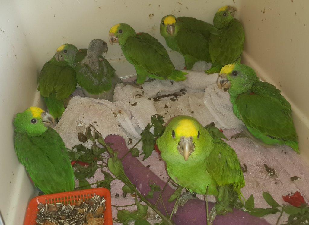 Avian Nursery and Quarantine Facility