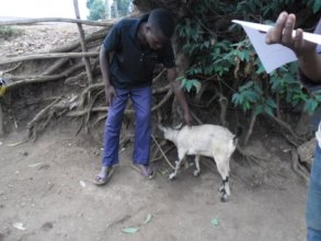 A young man receiving livestock training