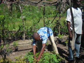 Tending tree nursery