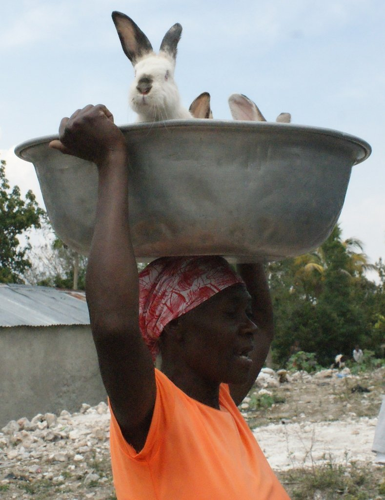 Help 500 Rural Haitian Families Fight Hunger