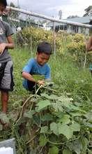 students harvest crops at school garden
