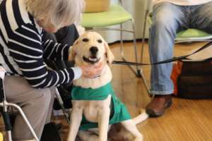 Jasper during therapy activity